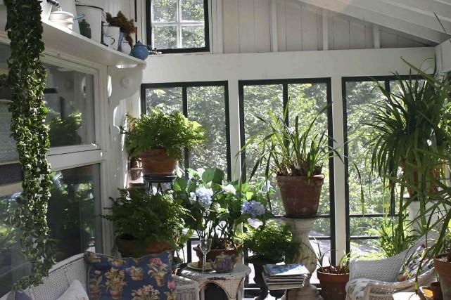 Il est conseillé d'approcher vos plantes des fenêtres... (www.jardinierparesseux.com)