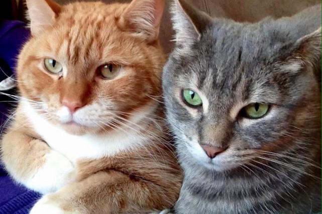 Malcolm et Timinou, de Jonquière, sont de vieux... (Photo courtoisie)