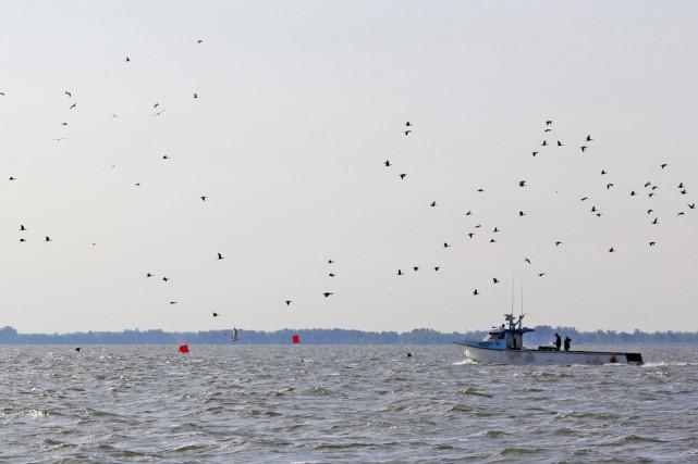 Des entrepreneurs en travaux sous-marins effectueront des recherches dans le... (Photo archives AP)
