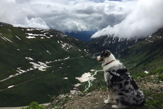 Cooper dans les alpes suisses.... (PHOTO FOURNIE PAR GABRIELLE GIROUX-BURROUGHS)