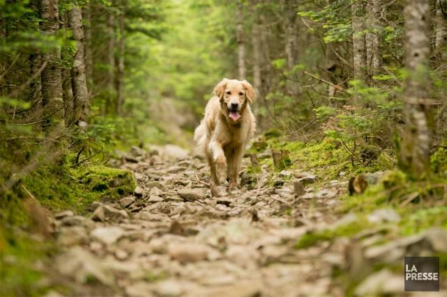 Le Québec, cancre nord-américain du tourisme canin? Difficile de prétendre le... (PHOTO DAVID BOILY, LA PRESSE)