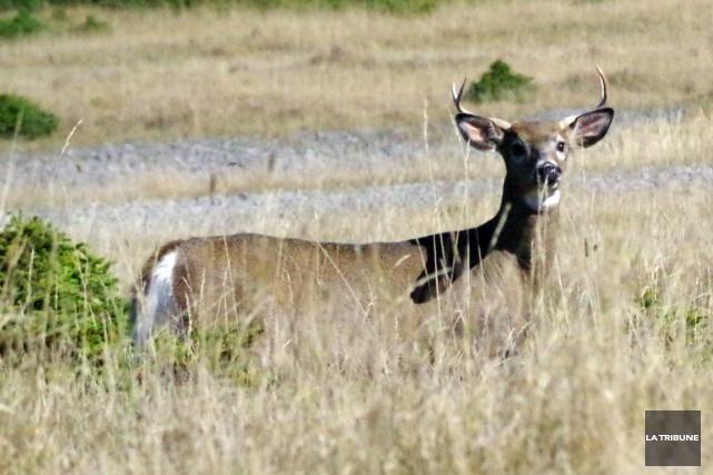 Alors que débute samedi la saison de chasse... (La Tribune, Luc Larochelle)