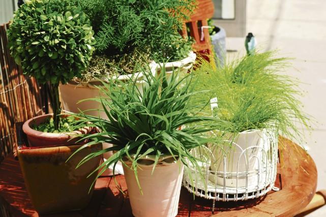 Il y a tant de raisons d'avoir de belles plantes d'intérieur dans nos maisons :... (123RF)
