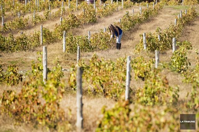 Les copropriétaires du vignoble Les Côtes du Gavet... (Archives La Tribune)