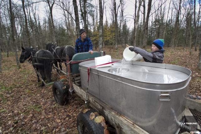 La famille Béliveau-Gosselin récolte l'eau de leurs érables... (Imacom, René Marquis)