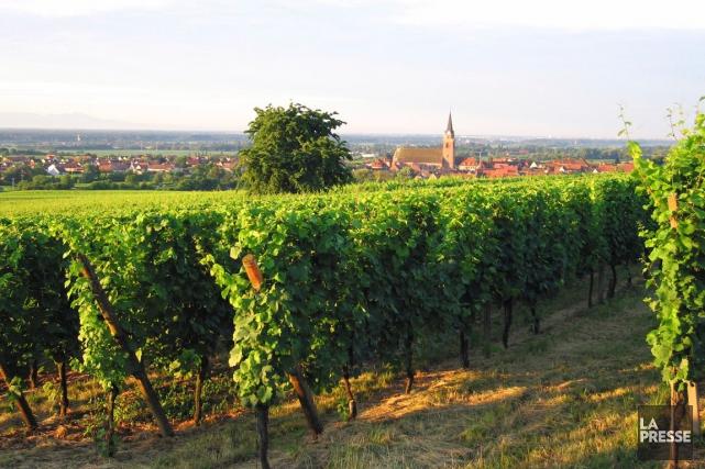 Les viticulteurs du Midi en colère «s'invitent dans le débat électoral»,... (PHOTO ARCHIVES LA PRESSE)