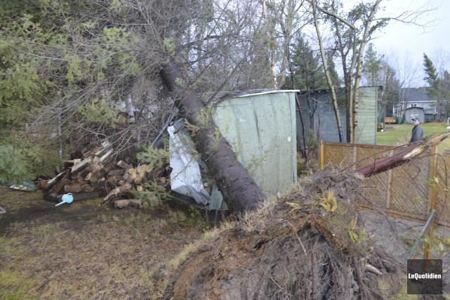 Plusieurs arbres ont été déracinés à cause des... (Photo Le Quotidien, Louis Potvin)