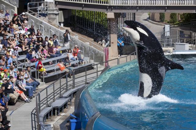 SeaWorlds'est défendu en déclarant qu'il traitait les animaux... (PHOTO REUTERS)