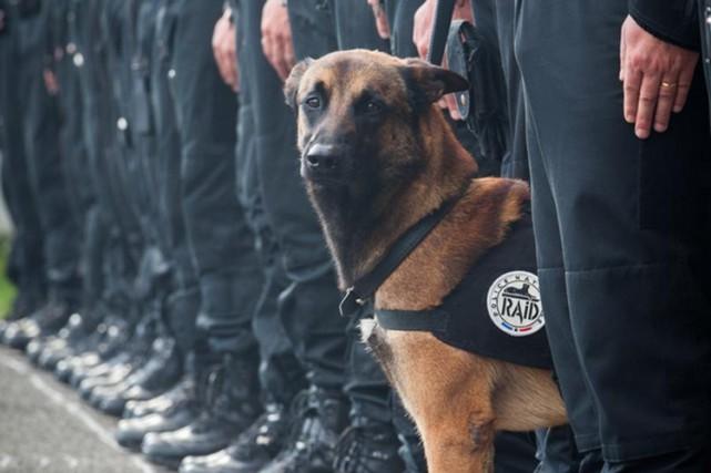 Le policier de l'unité d'élite RAID qui était le maître du chien Diesel, tué... (IMAGE TIRÉE DU COMPTE TWITTER DE LA POLICE NATIONALE FRANÇAISE)