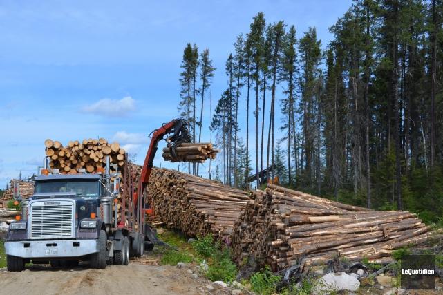 Le ministère des Forêts, de la Faune et des Parcs peaufine sa stratégie «... (Archives Le Quotidien, Louis Potvin)