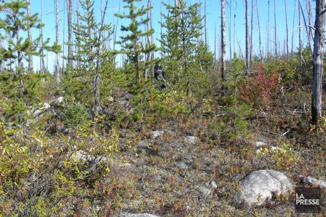 L'Association Forestière de la Vallée du Saint-Maurice (AFVSM) a tenu son... (La Presse)
