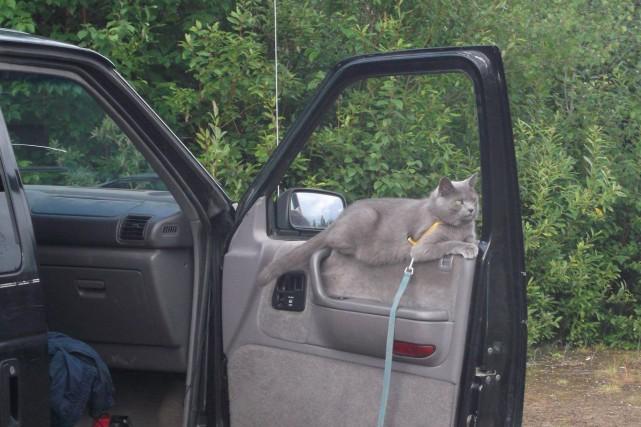 Richard Potvin et France Asselin, de Jonquière, possèdent une chatte qui s'est... (Photo courtoisie)