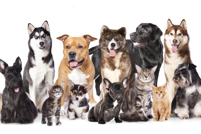 Le «pet lover» prend de plus en plus de place dans le monde animal. Qu'ils... (Photo 123RF)