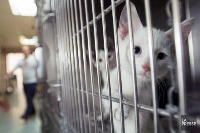 «Vous savez, quand on traite des animaux dans... (La Presse, Martin Chamberland)