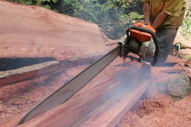 Des opérations de police ciblant le trafic de bois en Afrique de l'Ouest ainsi... (Photo archives AP)
