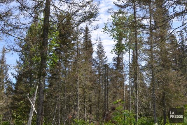 Québec en fait-il assez pour l'industrie forestière? Le premier ministre,... (Archives La Presse)
