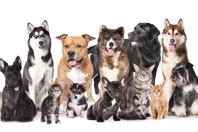 Voici un petit test pour savoir quel genre d'ami des animaux vous êtes. Allez-y... (Photo 123RF)
