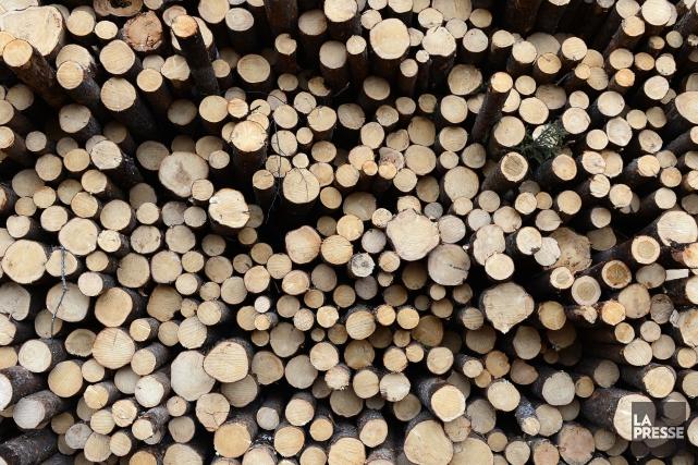 Sans jeux de mots, l'industrie forestière n'est pas sortie du bois, avec toutes... (Archives La Presse)