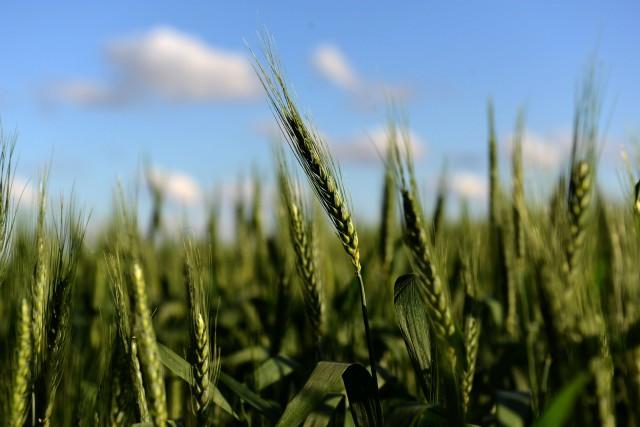 Certaines études suggèrent que l'agriculture est responsable de... (PHOTOEITAN ABRAMOVICH, ARCHIVES AGENCE FRANCE-PRESSE)