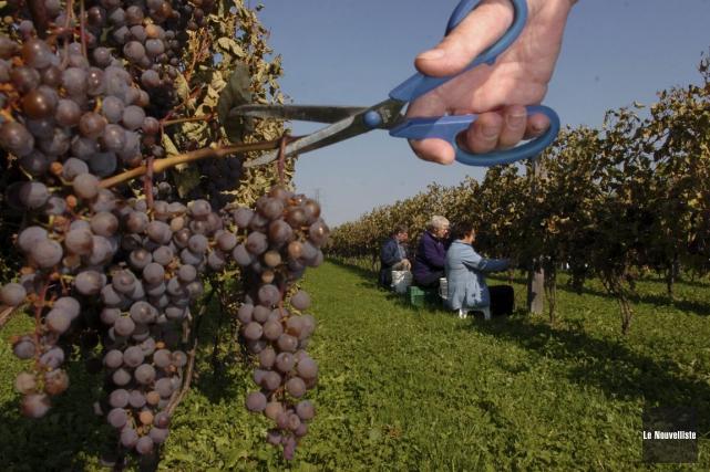 Les réactions des propriétaires de vignobles sont positives... (François Gervais, Le Nouvelliste)