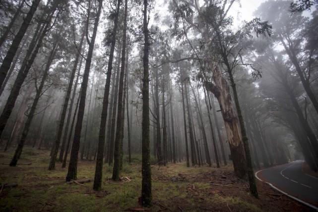 Les populations qui vivent de la forêt ont... (AFP, Désirée Martin)