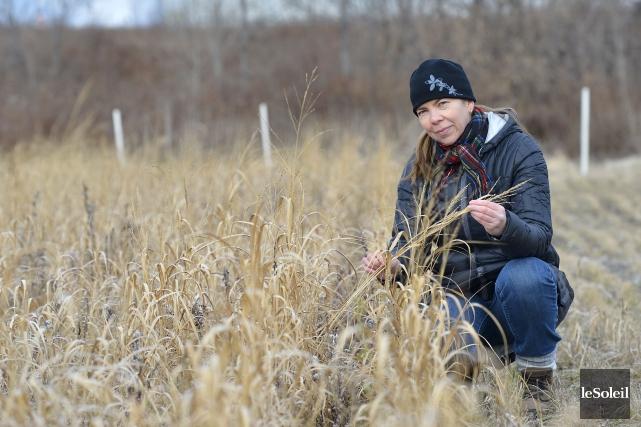 Isabelle Royer, chercheuse à Agriculture Canada, espère que... (Le Soleil, Yan Doublet)