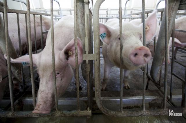 Le bien-être des animaux fait partie des nouvelles... (Photothèque La Presse)