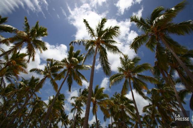 Sous les palmiers, les voyageurs ne jouissent pas... (La Presse)