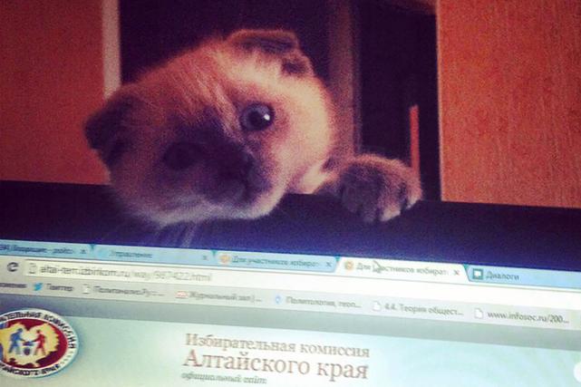 Un chat nommé Barsik a obtenu 91% des... (Photo AFP)