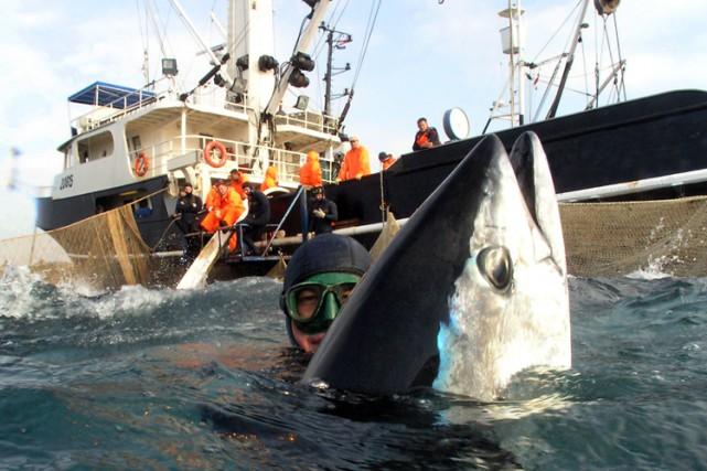 La France est l'un des grands pays pêcheurs... (ARCHIVES AFP)