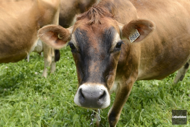 OPINION / L'agriculture se transforme. Les marchés se segmentent. Sur les... (Archives Le Quotidien, Jeannot Lévesque)
