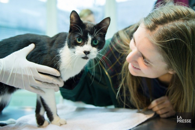 Il est désormais impossible de suivre certains établissements vétérinaires de... (Archives)