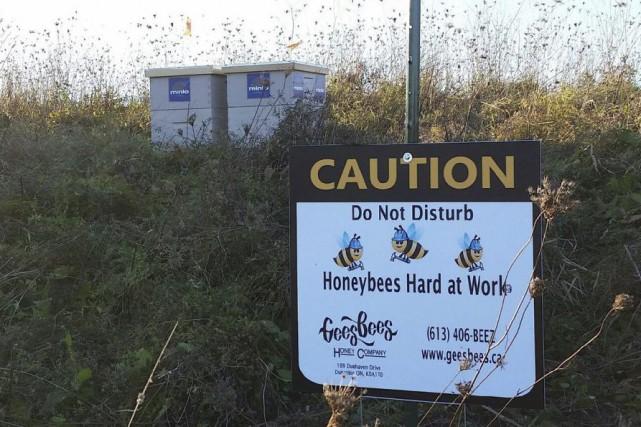 Les 30 000 abeilles volées risquent de mourir... (Photo fournie par Marianne Gee)