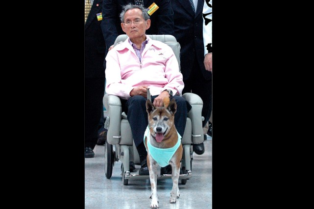 «Khun Tongdaeng s'est éteinte paisiblement dans son sommeil... (Photo AFP)