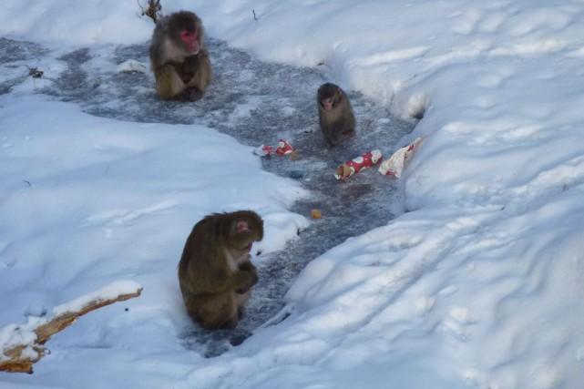 Les animaux du Zoo sauvage de Saint-Félicien eu... (Photo courtoisie)