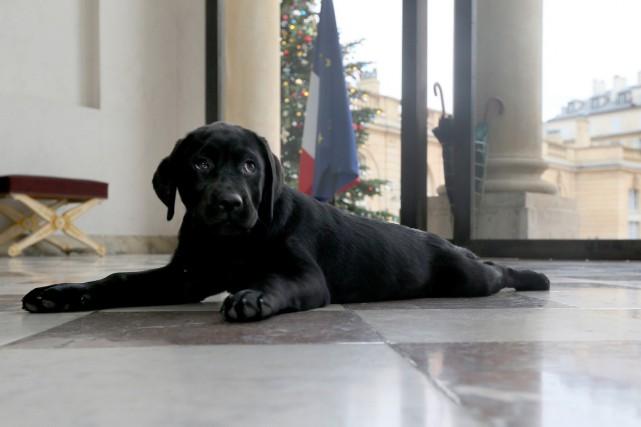 Le labrador montréalais Philae vient de fêter son... (Photo présidence française via AFP)