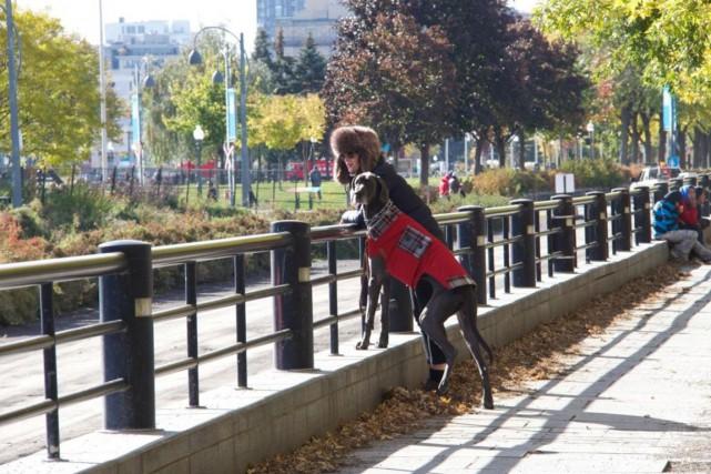 Le manteau, idéal pour les chiens à poils... (Photo fournie par Annabelle & Juliette)