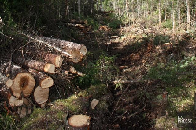 Le coût de la fibre de bois est définitivement plus élevé au Québec qu'en... (Archives La Presse)