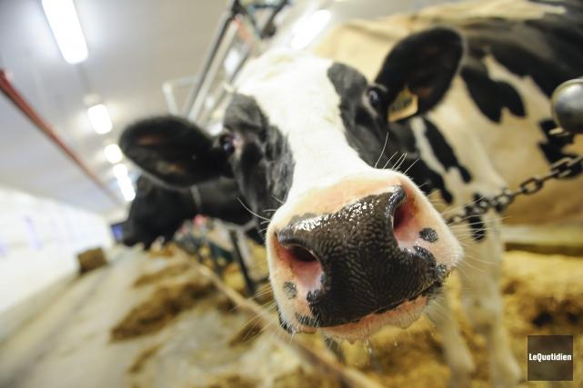 Pour la première fois de son histoire, la région a vu un de ses éleveurs... (Photo Le Quotidien, Gimmy Desbiens)