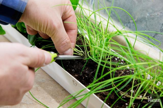 Pourquoi cultiver des fines herbes et petits légumes... (PHOTO ALAIN ROBERGE, LA PRESSE)