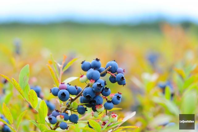 La saison des récoltes 2015 a été plutôt bonne au Saguenay-Lac-Saint-Jean. Les... (Archives Le Quotidien)