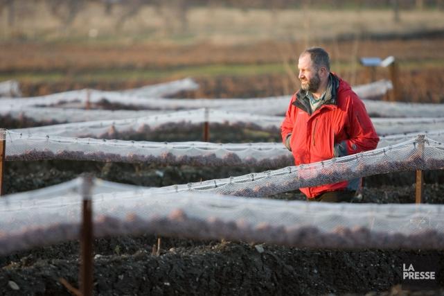 Charles-Henri de Coussergues, propriétaire du vignoble de l'Orpailleur... (PHOTO DAVID BOILY, ARCHIVES LA PRESSE)