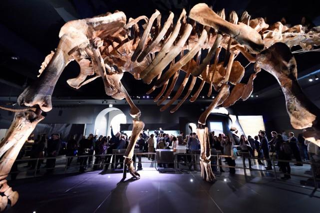 Avec son long cou, le titanosaure aurait pu... (Photo DON EMMERT, AFP)