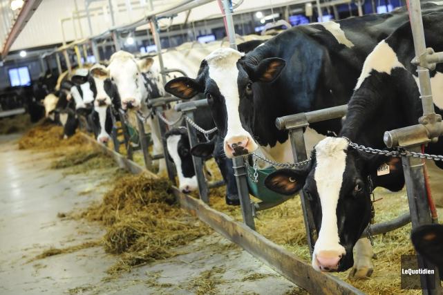 Une diminution de 3% des quotas de lait... (Archives Le Quotidien, Gimmy Desbiens)