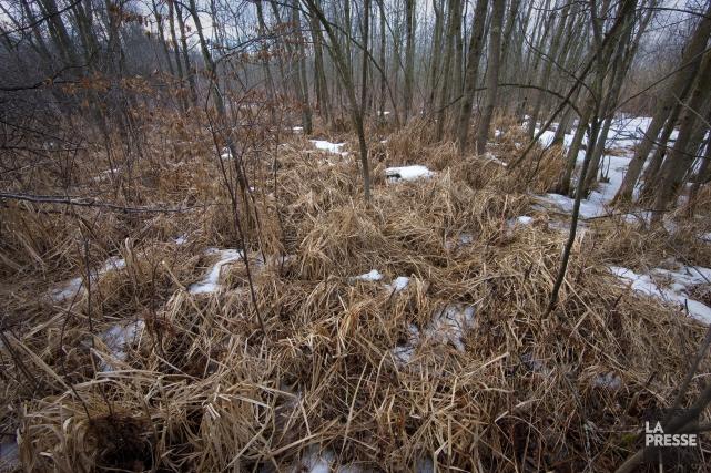 Non seulement les milieux humides jouent-ils le même... (Archives, La Presse)
