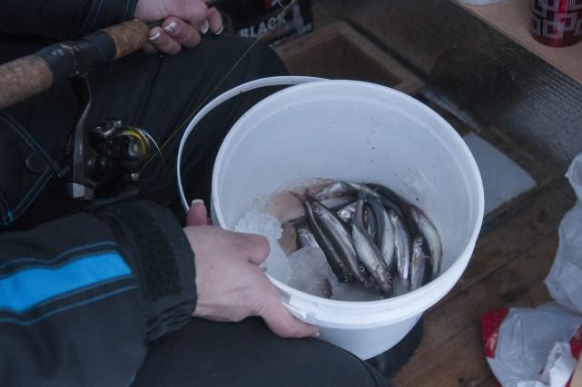 La première journée de pêche a permis aux... (Photo Le Progrès-Dimanche, Michel Tremblay)