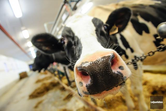 En 2015, les producteurs laitiers de la région... (Archives Le Quotidien, Gimmy Desbiens)