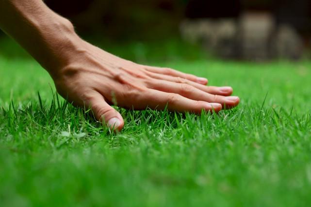 L'industrie de l'entretien des espaces verts émet des... (123rf/mihtiander)