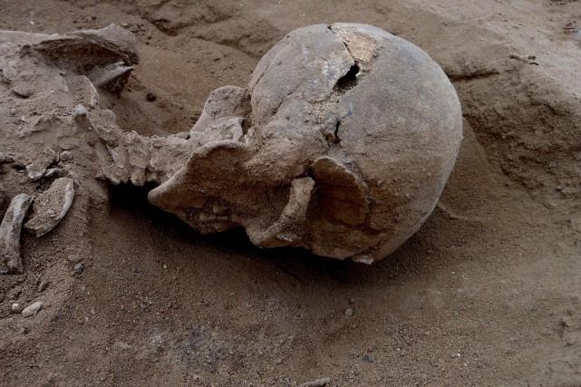 Dix des 12 squelettes retrouvés en bordure d'un... (PHOTO AFP/NATURE)