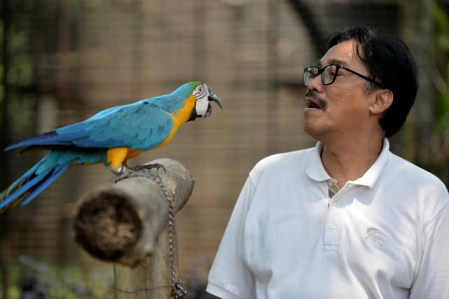 Megananda Daryono,défenseur des espèces sauvages, vend des oiseaux... (PHOTO Bay ISMOYO, AFP)